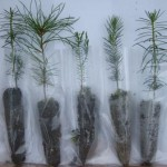 Seedling wedding favors- 5 types of seedlings