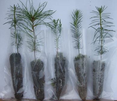 5 types of seedlings - Seedling Favors - Redrock Farm