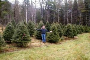 Christmas trees-field of balsams