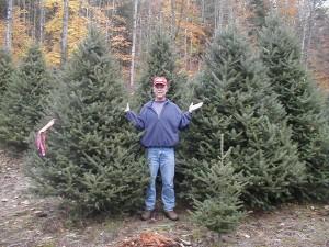 Christmas trees-9 foot balsams