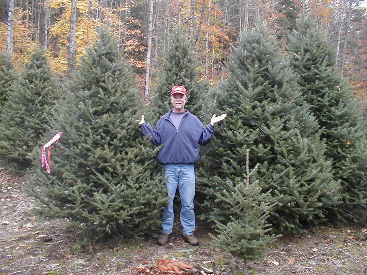 Christmas trees - Redrock Farm