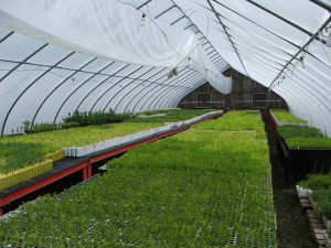 Evergreen Seedling Nursery Greenhouse