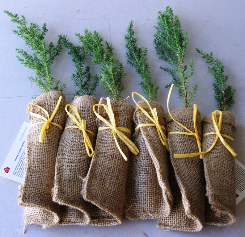 Pre Dressed Christmas Trees: Seedling Favor Pictures