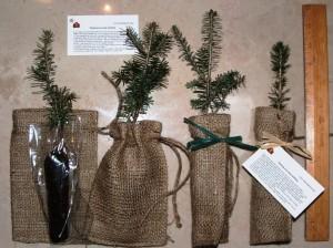 Seedling favors in burlap bags