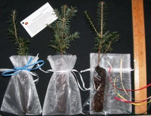 Organza bags with seedling favors