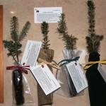 Blue Spruce Seedlings packaged different ways