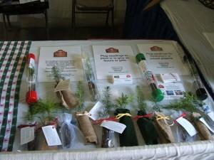 Evergreen seedling packaging