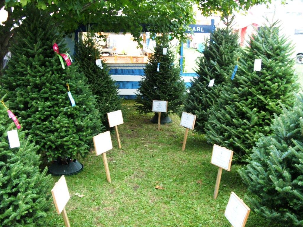Christmas Tree Farms Vermont