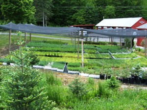 2015 SEEDLINGS UNDER SHADE STRUCTURE